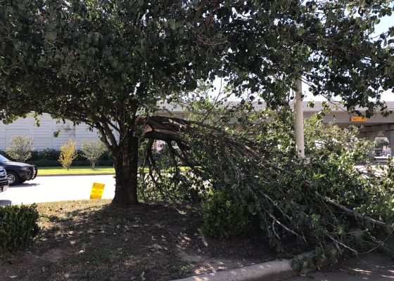 Are Trees A Liability On My Commercial Property?