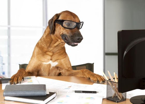 The Risks of Allowing Pets At Work