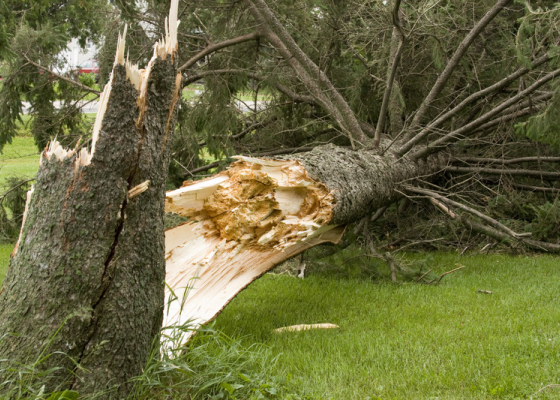 How to Protect Your Home from Windstorm Damage This Winter